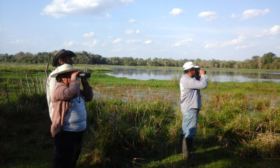 El presupuesto nacional solo contempla un 3% de lo destinado a la Ley de Bosques para el Chaco