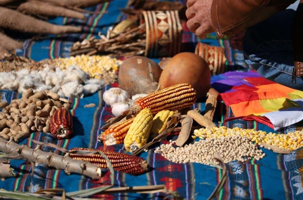 La agricultura familiar como actor clave en la producción local de alimentos saludables