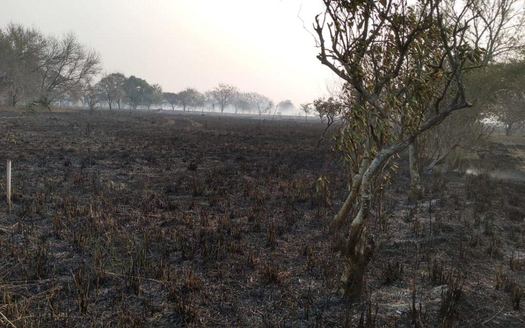 Incendio de gran magnitud consumió 35 hectáreas del predio de la organización INCUPO en Reconquista