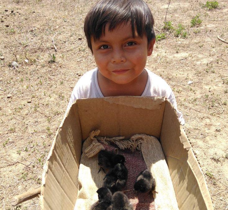 Aseguramos alimentos sanos para comunidades indígenas del Chaco