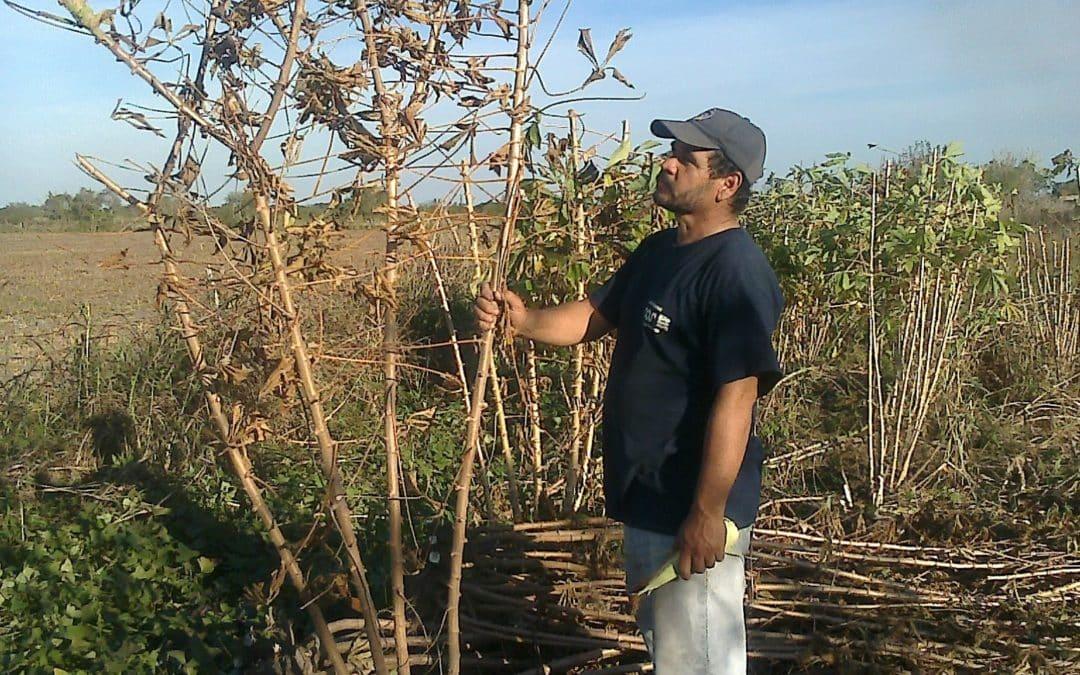 La agricultura familiar imprescindible: Obreros del Surco